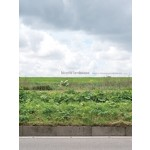 Bicycle Landscape why the netherlands looks like this | nai010 uitgevers/publishers |  9789462083875